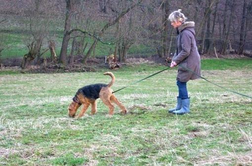 verbotene hunde berlin